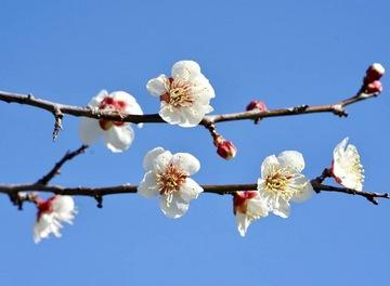 sakura2.JPGのサムネイル画像